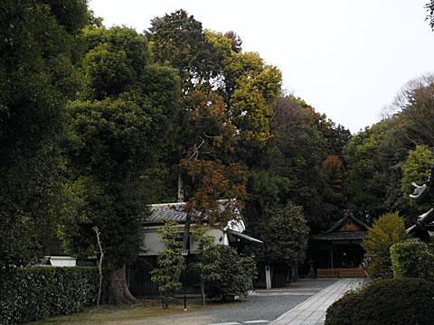 木嶋神社境内