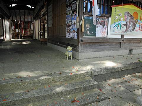 羽束師神社 拝殿の犬
