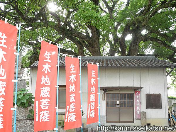 生木地蔵棠