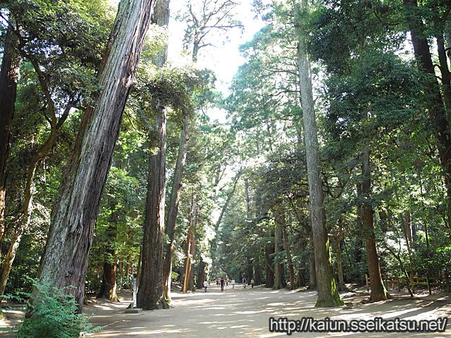鹿島神宮の森